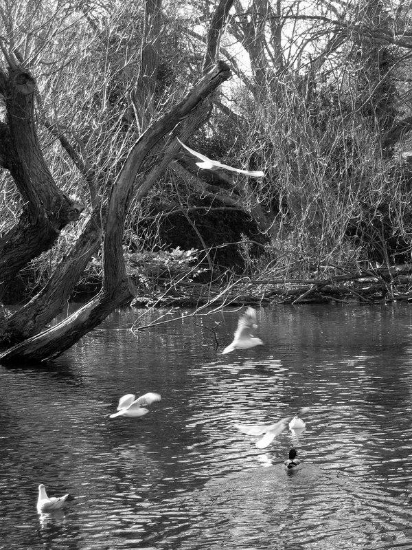 Seagulls on lake