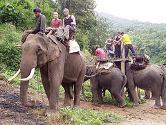 Our Elephant Ride!! WOOT