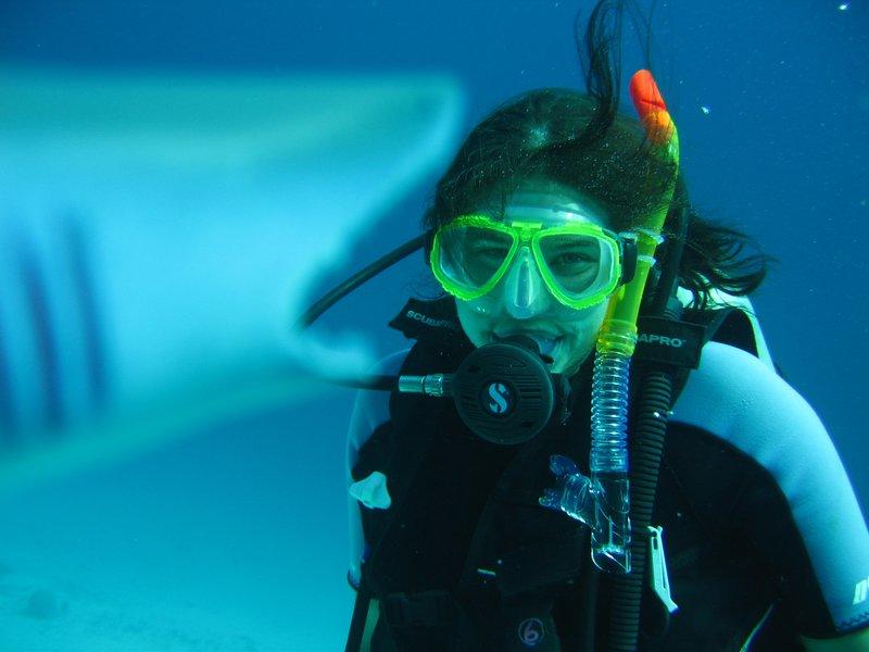 Sharkies!