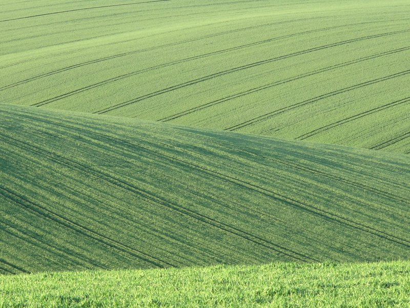 Rolling English fields