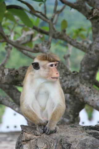 Monkey Chillin...