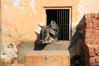 2008-03-25, Rajasthan, Jaipur 017