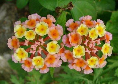 Flowers at Hoa Lư