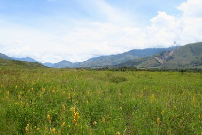 Meadow near Wamena