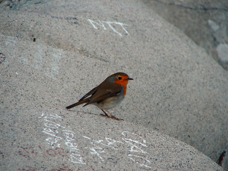 Robin and graffiti