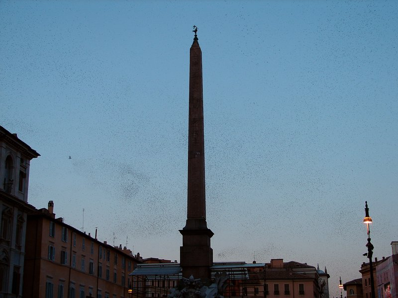 Starlings in Piazza Navona