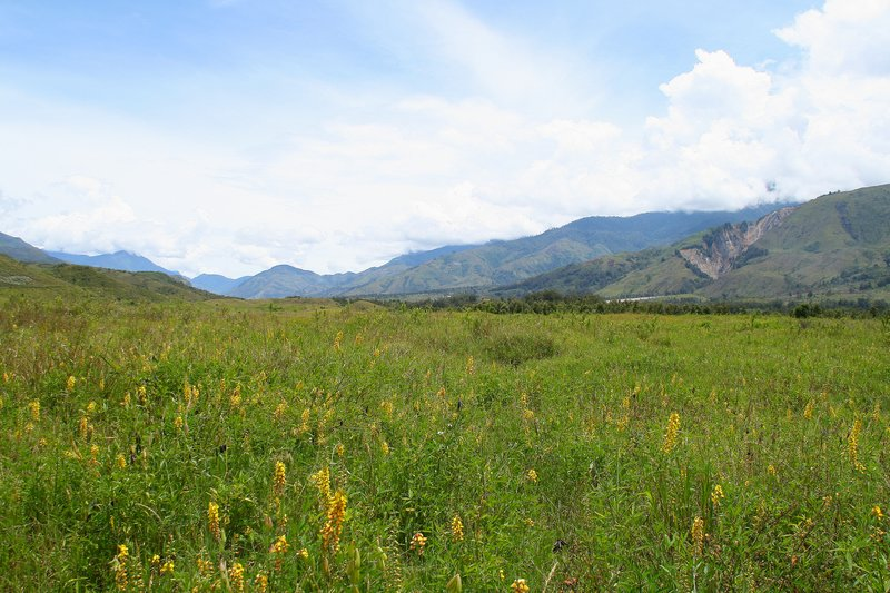 Meadow near Wamena