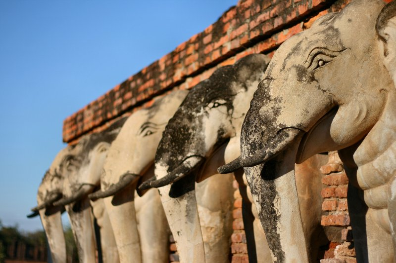 Elephant heads