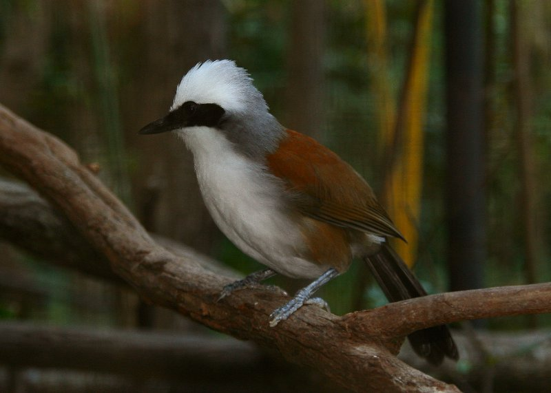 Bird at Chiang Mai zoo