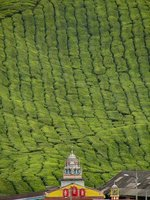 Temple and tea