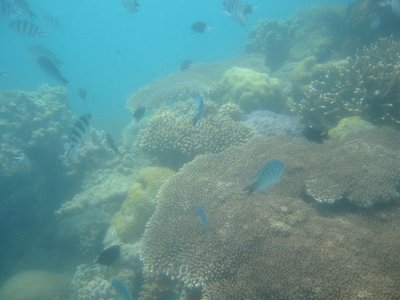 Snorkelling at Whitsundays