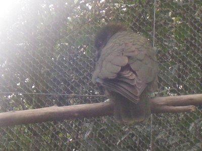 Dunedin Zoo Kia