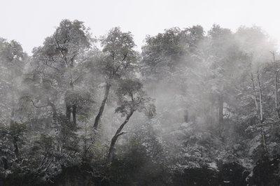 TJT_6457_S..n_Trees.jpg