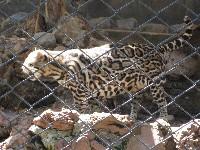 Zoo von San Jose