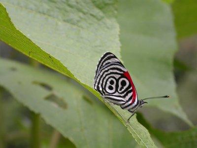 89 butterfly