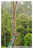 Canopy Walk Danum Valley