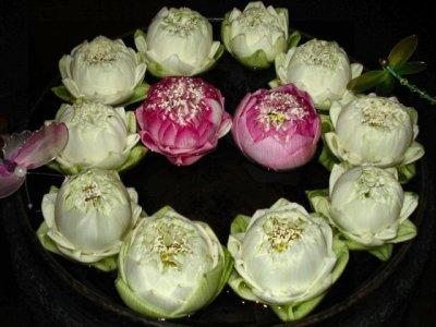 BKdinsoflower.jpg