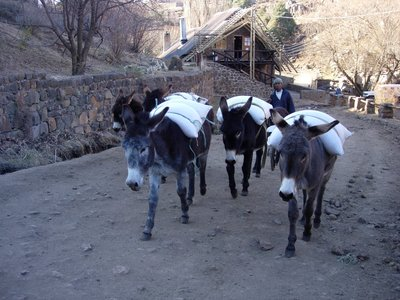 transport lesotho style