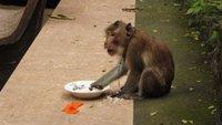 btb_monkey.jpg