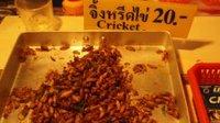 thai2_cricket1.jpg