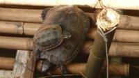 thai2_turtle_power.jpg