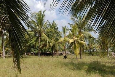 Mida village