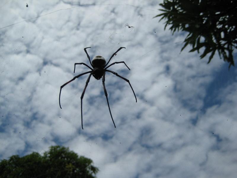 IMG_6502_Tanzania_Zanzibar_Stonetown park spider