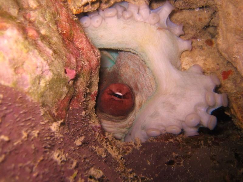 IMG_6748_Tanzania_Zanzibar_octopuss eye and tentacle