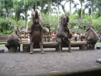 Elephants on show