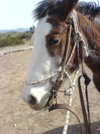 Mendoza Horse Riding (19)