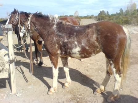 Mendoza Horse Riding (20)