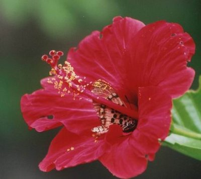 Flowers of Sengal