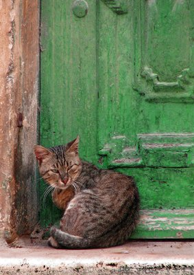 Green Door, What's That Secret You're Keeping?