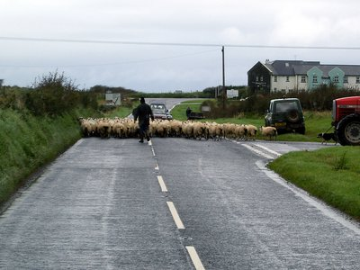an Irish traffic jam