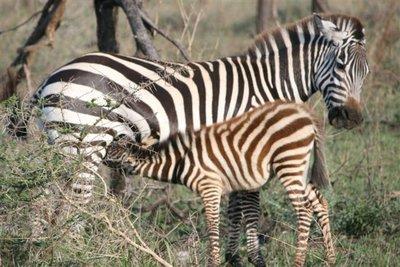 Tanzania_124.jpg