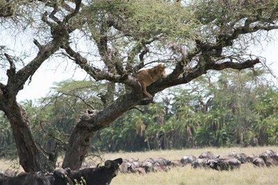 Tanzania_143.jpg