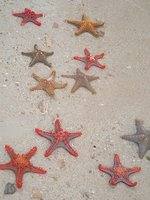 Star Fish
