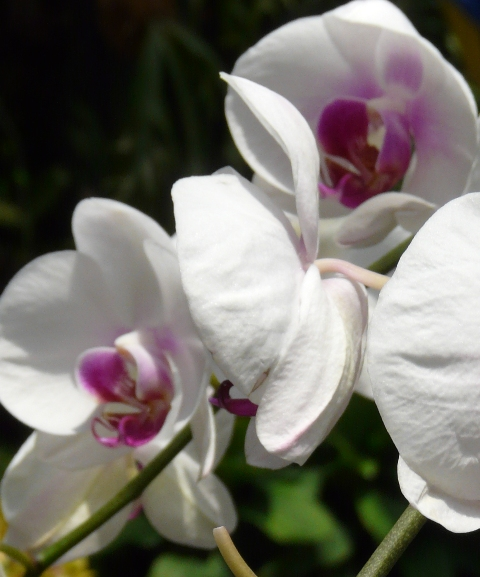 Some Orchids from the Botanical Gardens