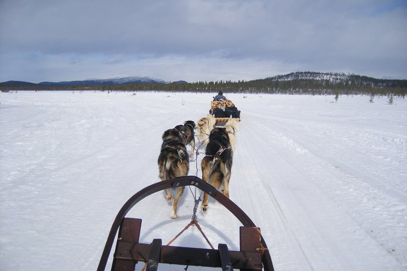 Dogsledding in the Arctic Circle