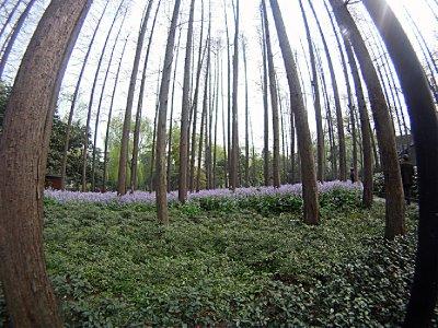 13_Trees