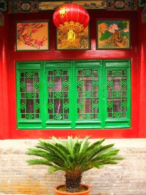 Picturesque Sago Palm