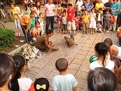 Monkey and their anti-PETA handlers