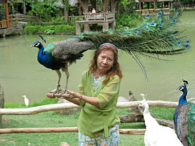 Yun Sunee with peacock