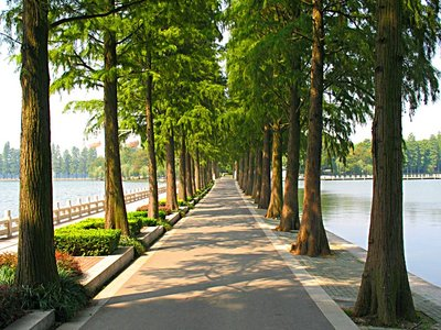 WELL Tree-lined Road