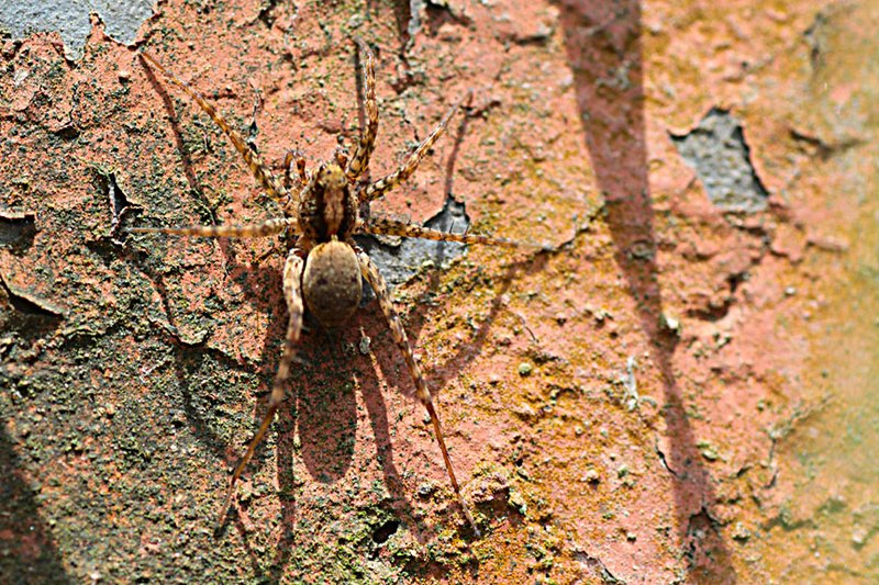 Looks like a wolf spider but who knows?