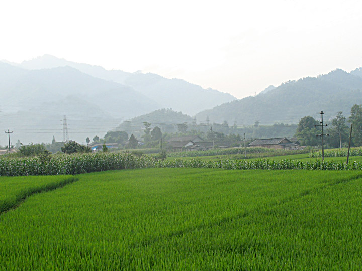 CS Rice Fields
