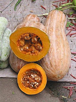 MM Pumpkin Season
