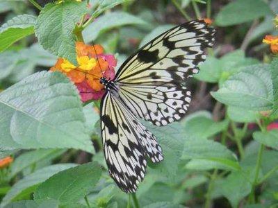 butterflyfarm.jpg