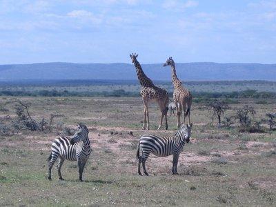 Africa_Tri..ia__007.jpg