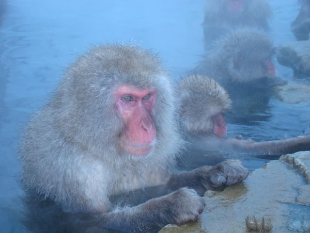 Enjoying the hot spring.JPG
